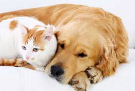 ماذا تقول إذا وجدت من يؤذي حيوانا؟