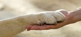 الخلاف على راحمي الحيوانات