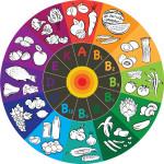 195878-vitamin-wheel