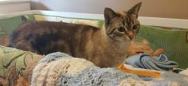 الحامل والقطط: تعرفي على الحقيقة