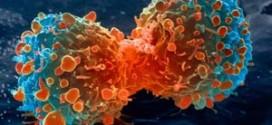 أمل جديد لعلاج السرطان جاء بالمصادفة الغريبة