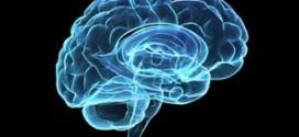 غذاء المخ وتنشيط الدورة الدموية به (14) داليا رشوان