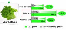 الزراعة تحت إضاءة LED الزرقاء والحمراء تعطي نتائج جيدة جداً للخضروات الورقية
