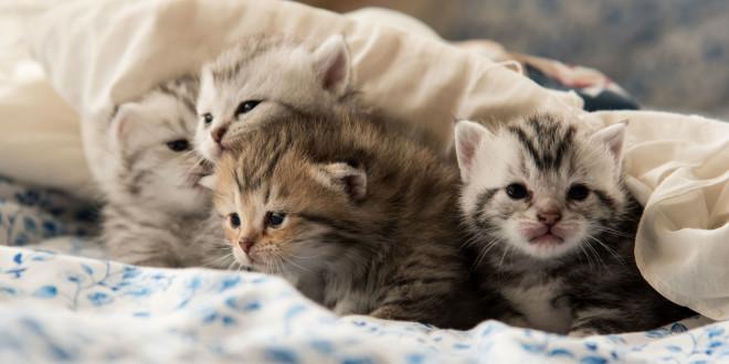 تحريم ما أحل الله في تنفير الناس من تربية القطط
