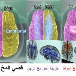 brain8