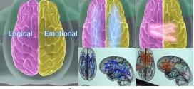 هل يعمل مخ المرأة بنفس طريقة عمل مخ الرجل؟